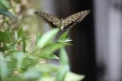 08081402butterfly