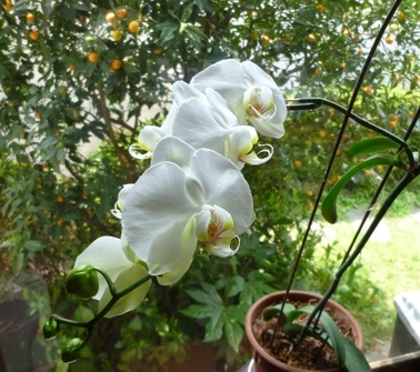 11051802orchid