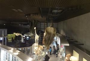 150217dinosaurs